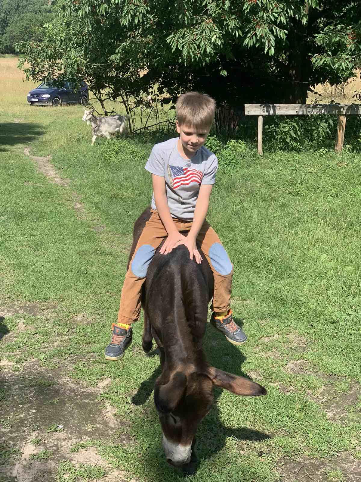 Запрошуємо дорослих і дітей на ферму до віслючка і овечок